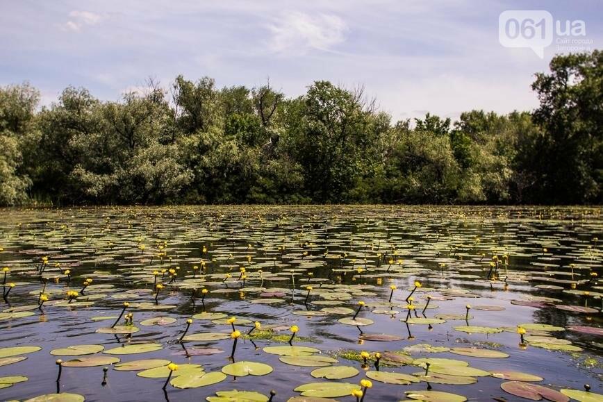"""Тырло, саламур и """"дикари"""": один день на острове посреди Днепра, - ФОТОПРОЕКТ, фото-23"""