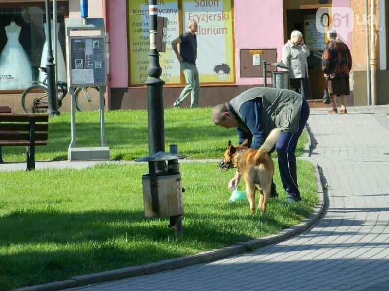 12 идей для Запорожья: что наш город мог бы перенять у разных стран мира, - ФОТО , фото-10