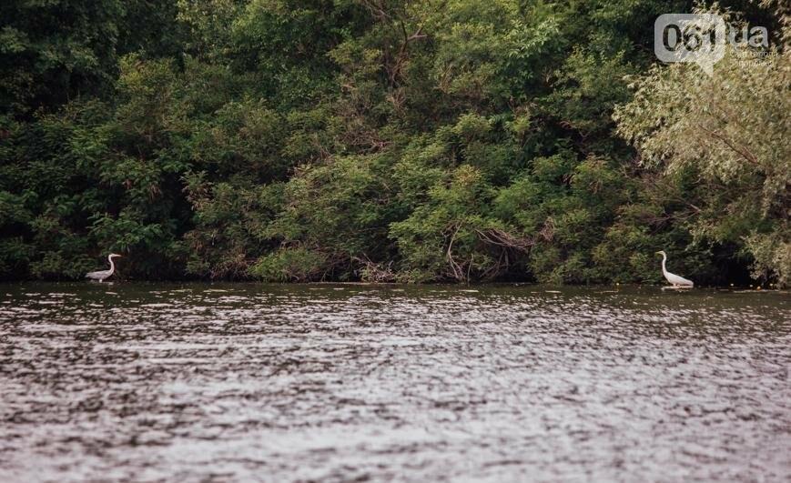 """Тырло, саламур и """"дикари"""": один день на острове посреди Днепра, - ФОТОПРОЕКТ, фото-50"""