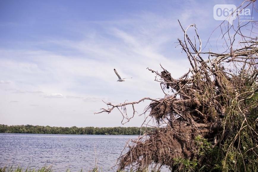 """Тырло, саламур и """"дикари"""": один день на острове посреди Днепра, - ФОТОПРОЕКТ, фото-35"""