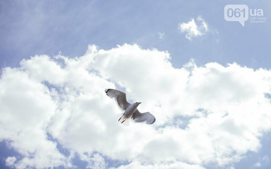 """Тырло, саламур и """"дикари"""": один день на острове посреди Днепра, - ФОТОПРОЕКТ, фото-38"""