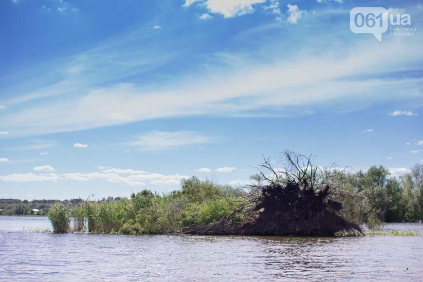 """Тырло, саламур и """"дикари"""": один день на острове посреди Днепра, - ФОТОПРОЕКТ, фото-36"""