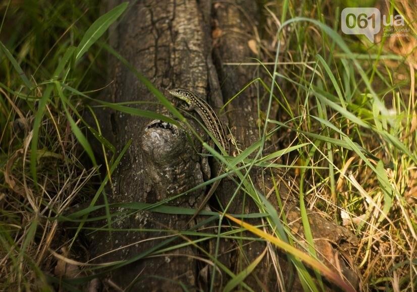 """Тырло, саламур и """"дикари"""": один день на острове посреди Днепра, - ФОТОПРОЕКТ, фото-17"""