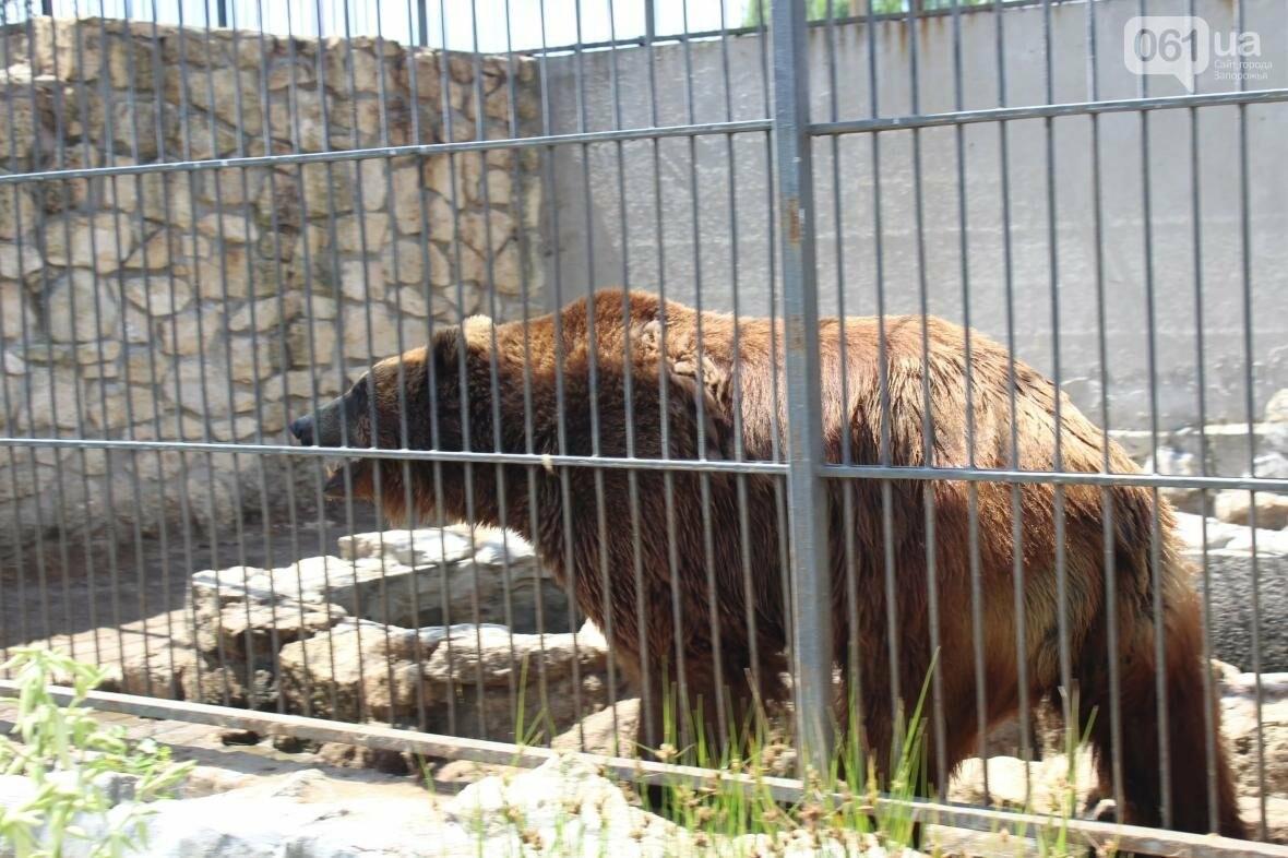 С хищниками в доме: экскурсия по частному зоопарку в Васильевке, — ФОТОРЕПОРТАЖ, фото-19