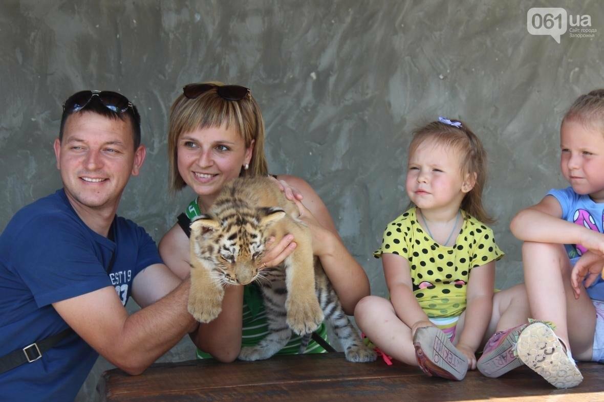 С хищниками в доме: экскурсия по частному зоопарку в Васильевке, — ФОТОРЕПОРТАЖ, фото-14