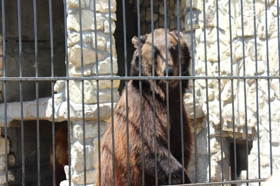 С хищниками в доме: экскурсия по частному зоопарку в Васильевке, — ФОТОРЕПОРТАЖ, фото-20