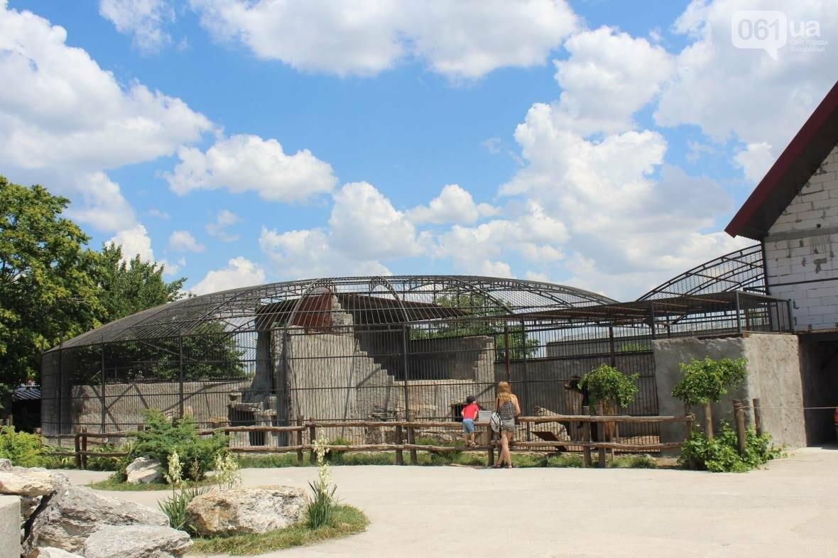 С хищниками в доме: экскурсия по частному зоопарку в Васильевке, — ФОТОРЕПОРТАЖ, фото-1