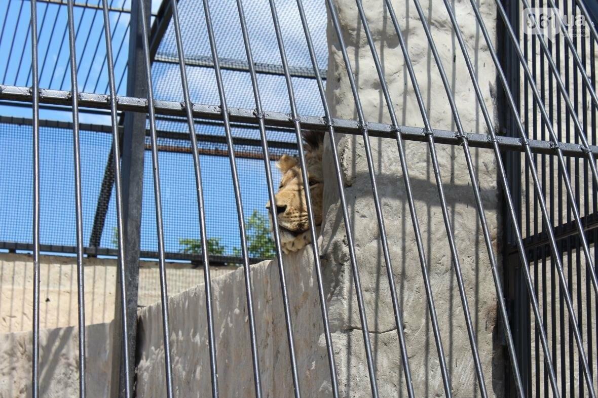 С хищниками в доме: экскурсия по частному зоопарку в Васильевке, — ФОТОРЕПОРТАЖ, фото-5