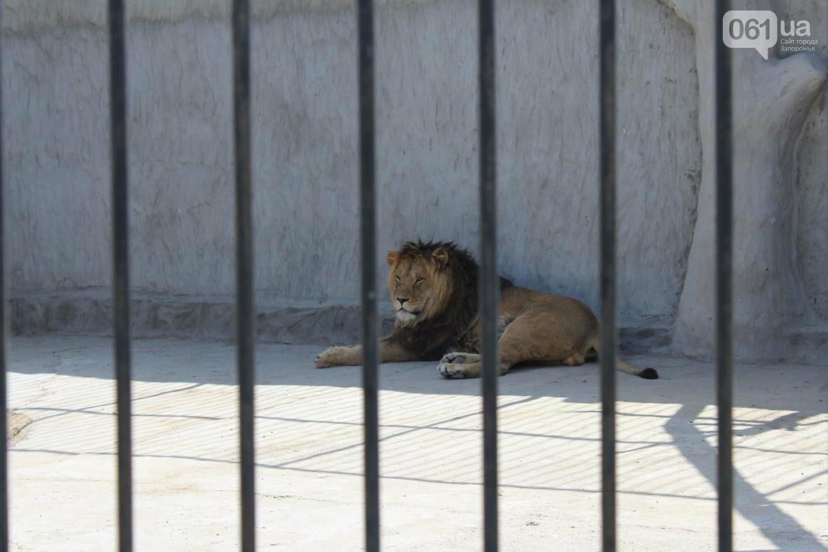 С хищниками в доме: экскурсия по частному зоопарку в Васильевке, — ФОТОРЕПОРТАЖ, фото-4