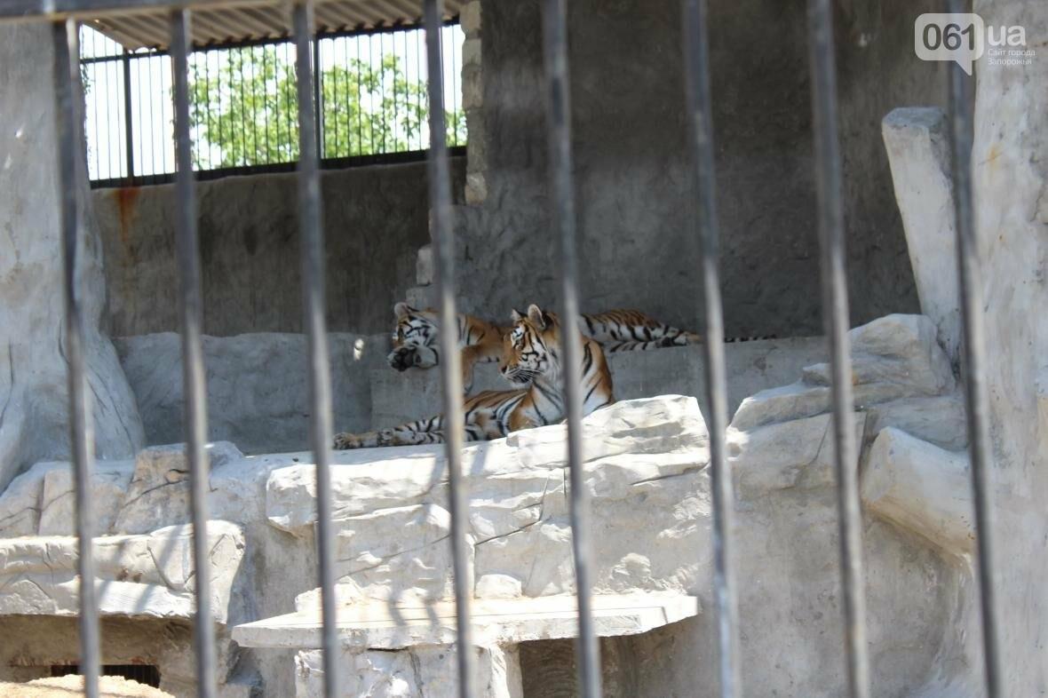 С хищниками в доме: экскурсия по частному зоопарку в Васильевке, — ФОТОРЕПОРТАЖ, фото-17
