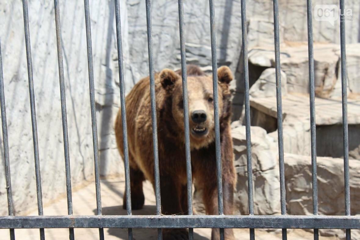 С хищниками в доме: экскурсия по частному зоопарку в Васильевке, — ФОТОРЕПОРТАЖ, фото-18