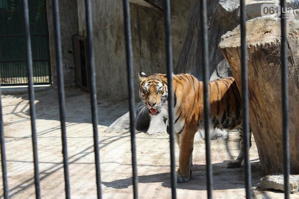 С хищниками в доме: экскурсия по частному зоопарку в Васильевке, — ФОТОРЕПОРТАЖ, фото-21