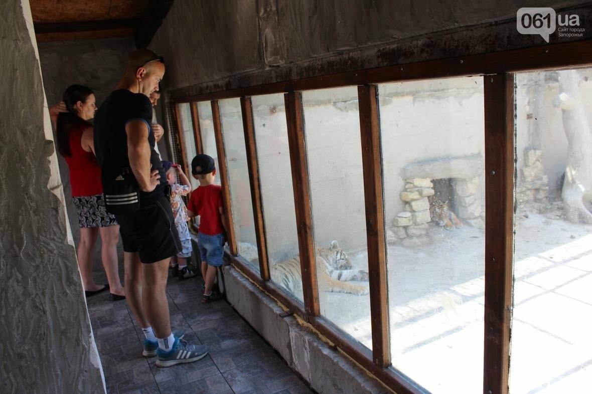 С хищниками в доме: экскурсия по частному зоопарку в Васильевке, — ФОТОРЕПОРТАЖ, фото-7