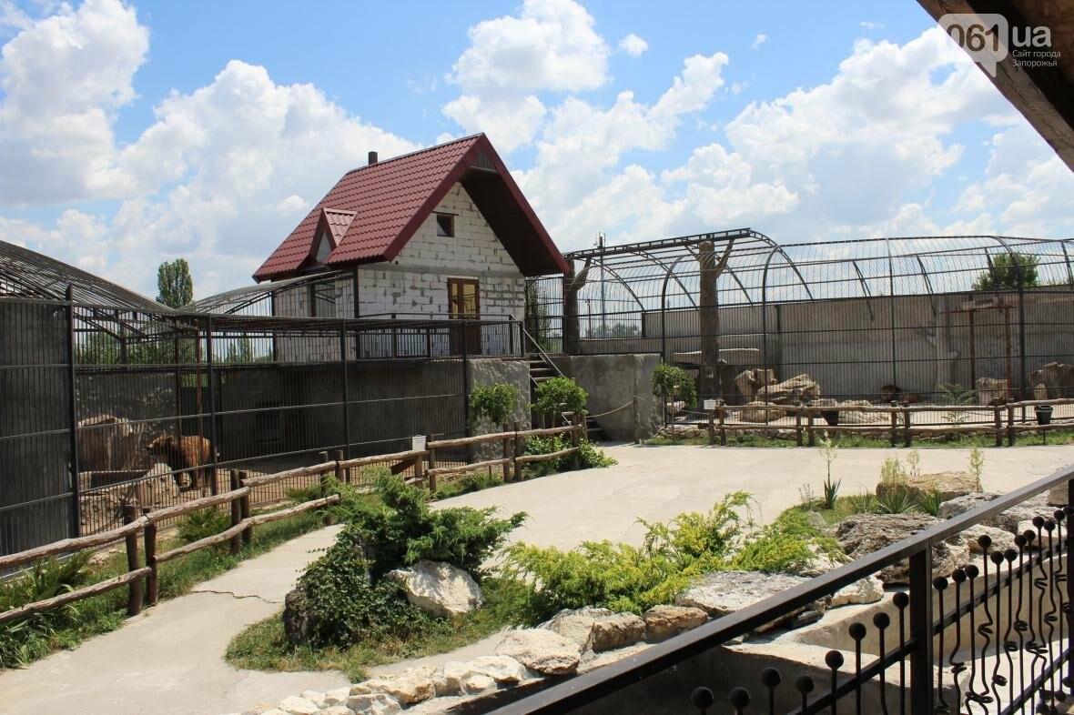 С хищниками в доме: экскурсия по частному зоопарку в Васильевке, — ФОТОРЕПОРТАЖ, фото-9