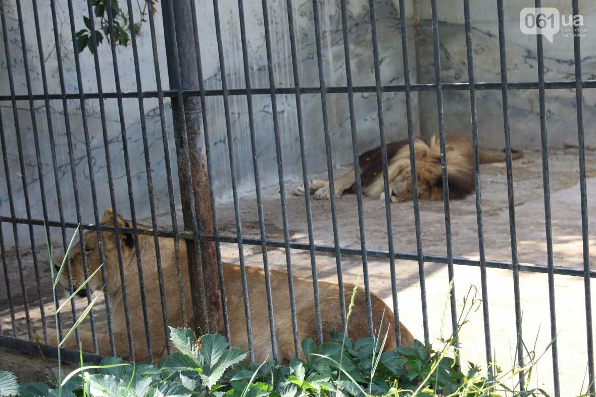 С хищниками в доме: экскурсия по частному зоопарку в Васильевке, — ФОТОРЕПОРТАЖ, фото-6