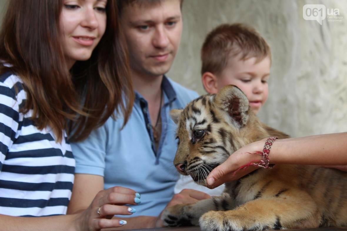 С хищниками в доме: экскурсия по частному зоопарку в Васильевке, — ФОТОРЕПОРТАЖ, фото-16