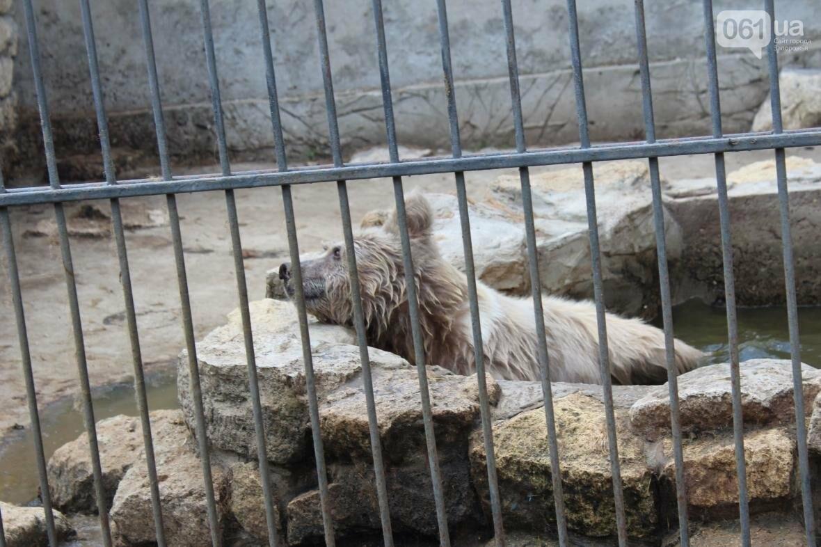 С хищниками в доме: экскурсия по частному зоопарку в Васильевке, — ФОТОРЕПОРТАЖ, фото-22
