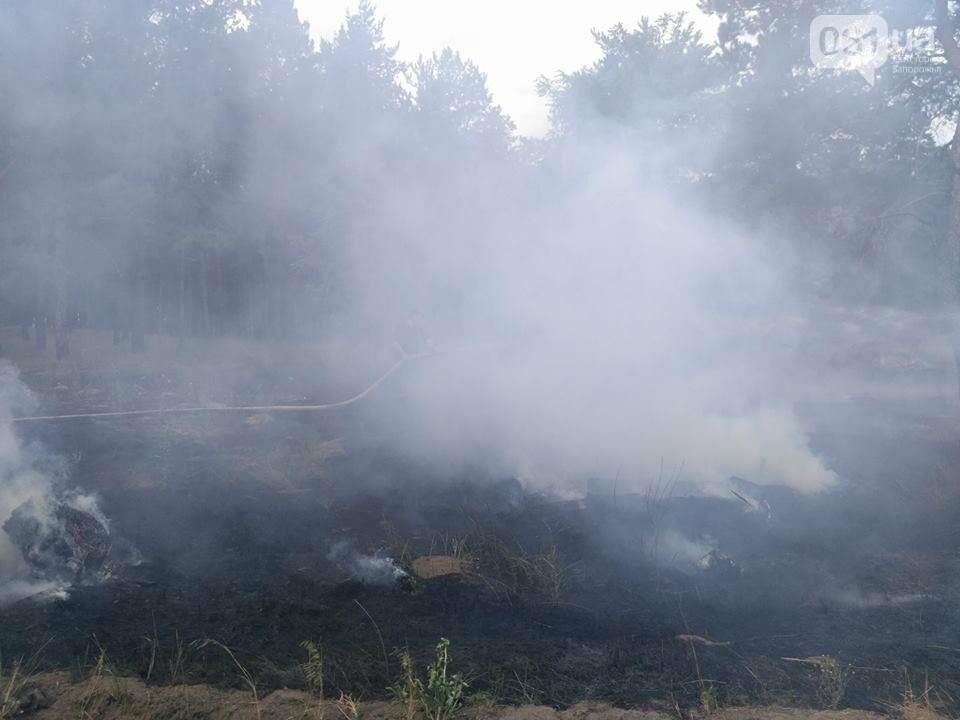 В Запорожье снова случился пожар на Хортице, - ФОТО, ВИДЕО, фото-1