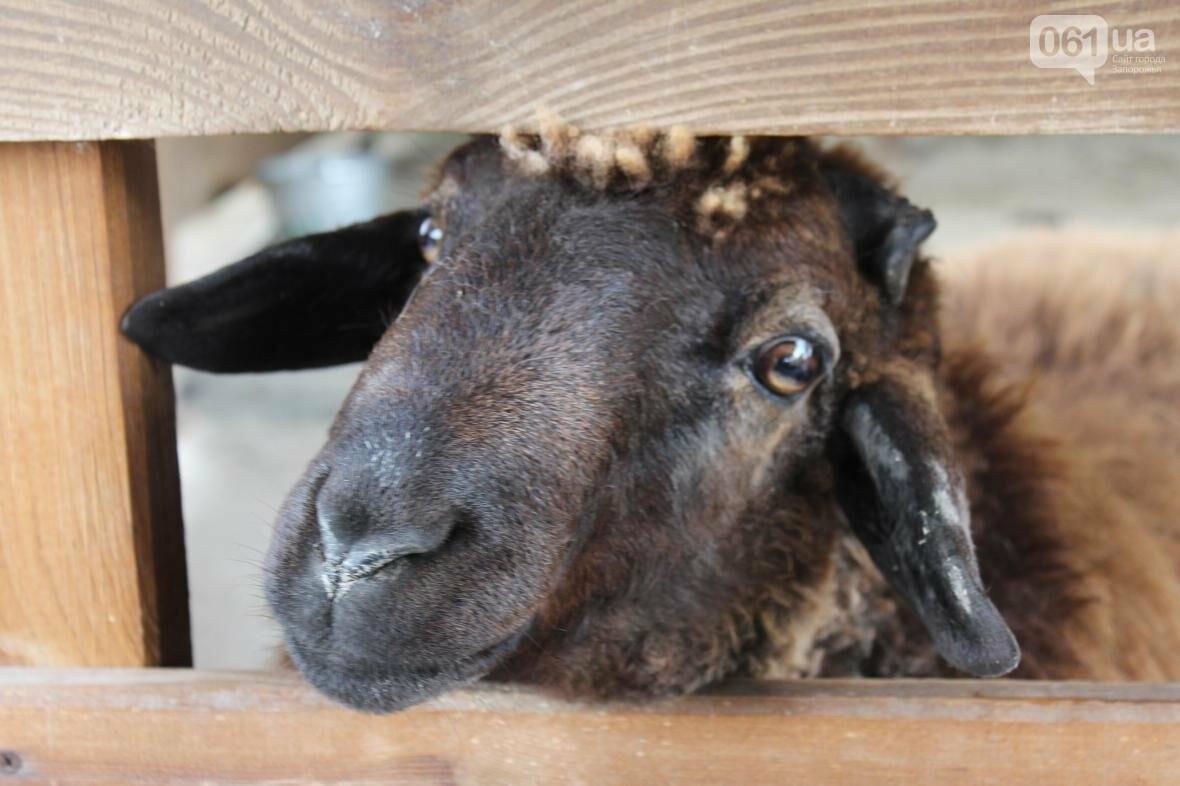 «Городские малыши, когда видят корову, говорят – какая большая собака!»: интервью с основателем зеленой усадьбы, фото-13