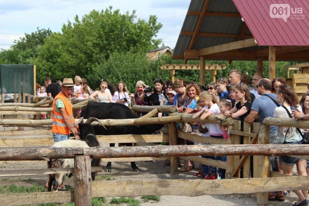 «Городские малыши, когда видят корову, говорят – какая большая собака!»: интервью с основателем зеленой усадьбы, фото-10