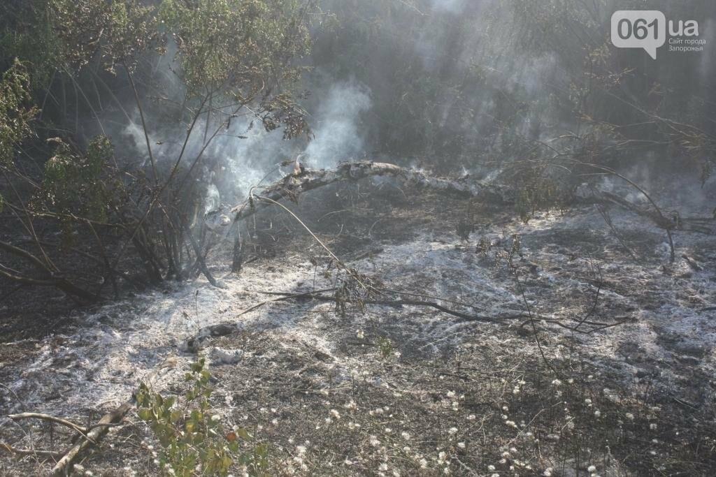 На запорожской Хортице потушили очередной крупный пожар, – ФОТО, фото-3