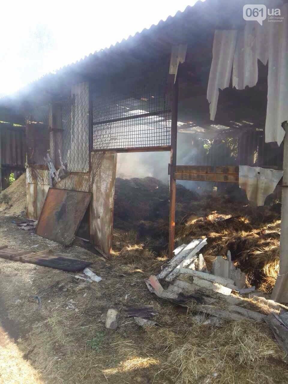 Ночью на Хортице горела конюшня: в администрации заповедника уверены, что это поджог, - ФОТО , фото-2