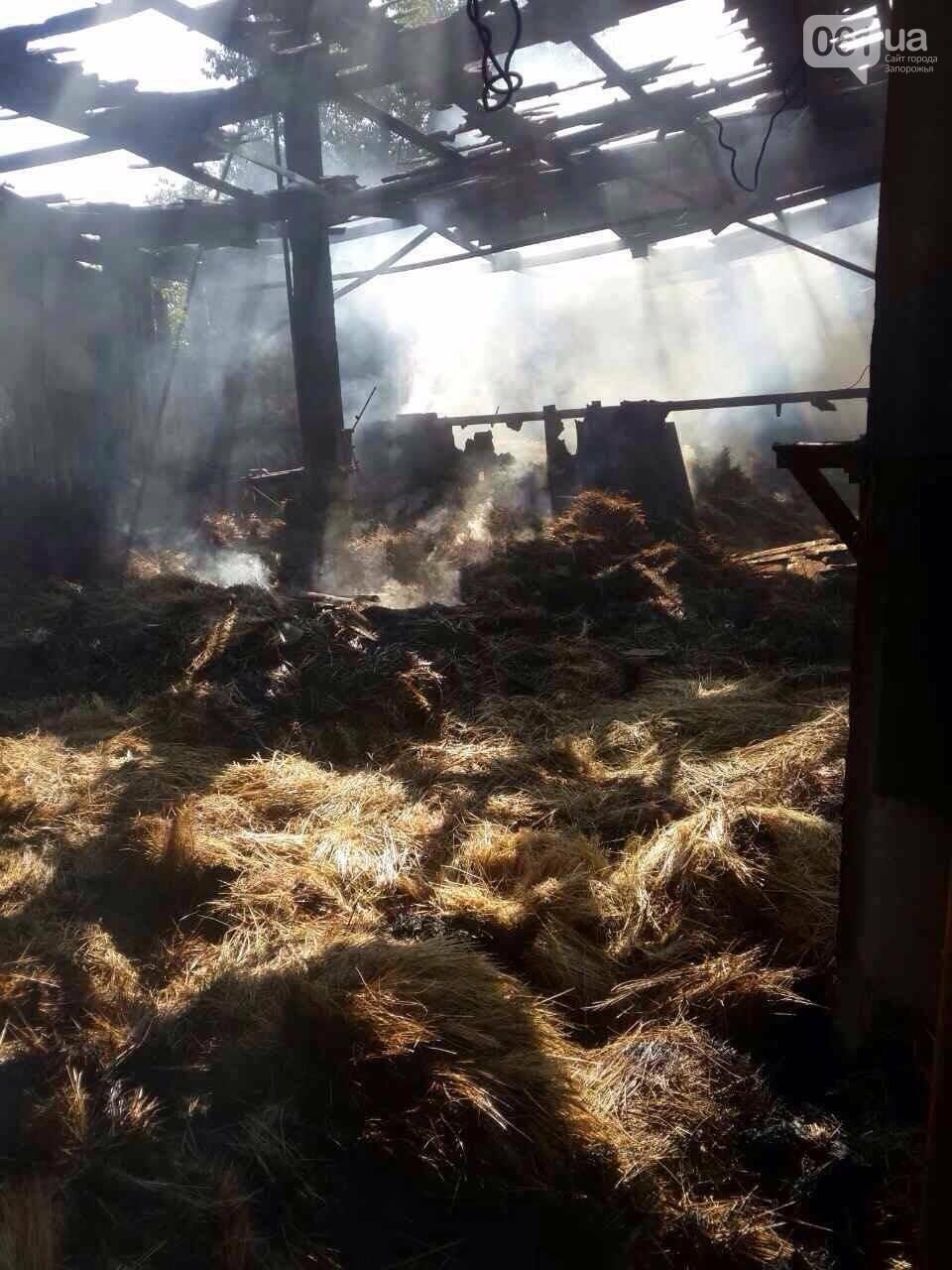 Ночью на Хортице горела конюшня: в администрации заповедника уверены, что это поджог, - ФОТО , фото-3