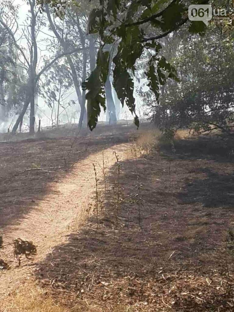 Очередной пожар на Хортице: выгорело несколько гектаров леса, - ФОТО , фото-1