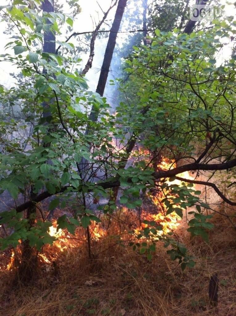 Очередной пожар на Хортице: выгорело несколько гектаров леса, - ФОТО , фото-3