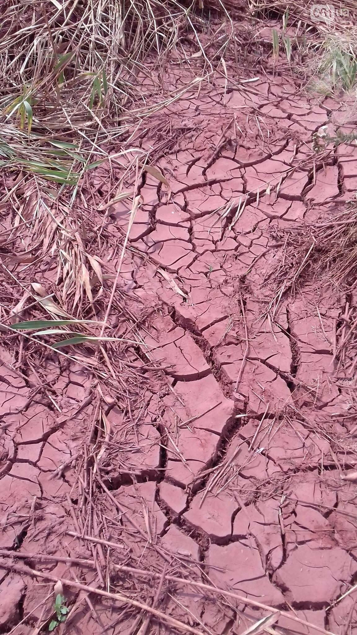 «Справжній екоцид»: чиновник, показал как запорожский завод загрязняет окружающую среду, — ФОТО, фото-5