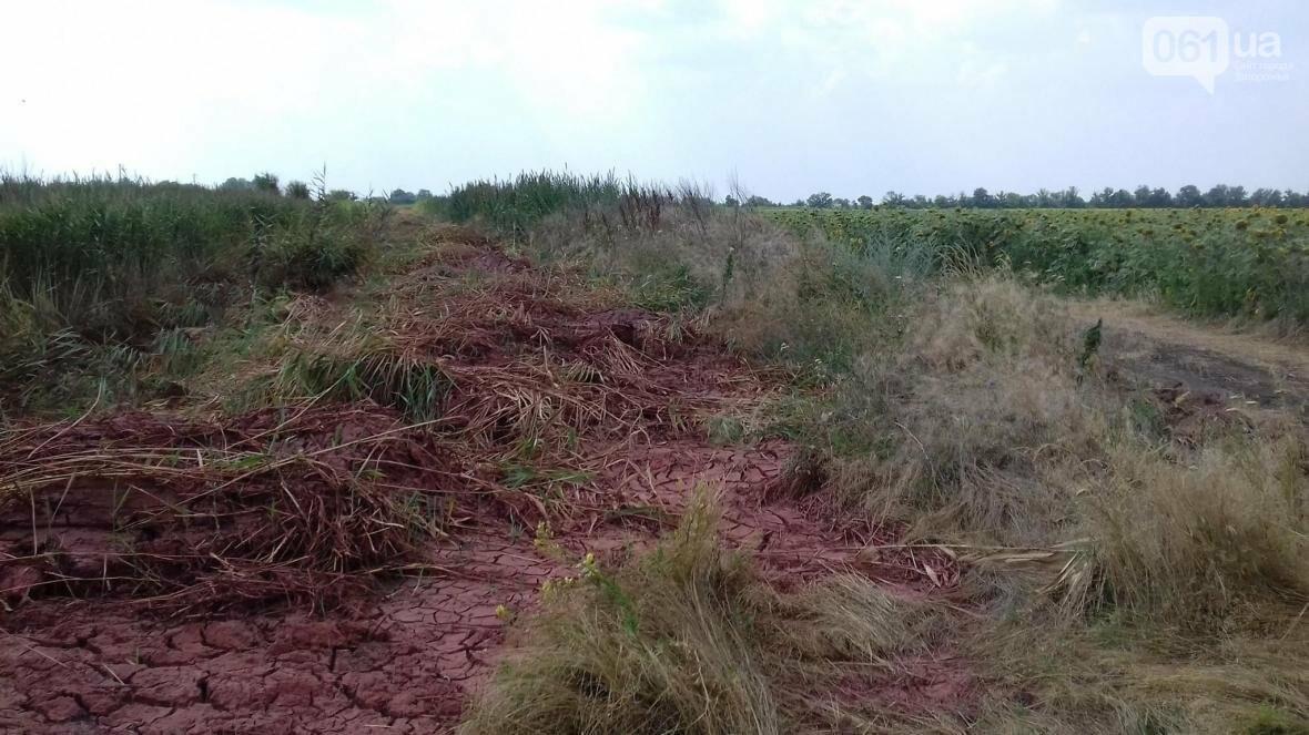 «Справжній екоцид»: чиновник, показал как запорожский завод загрязняет окружающую среду, — ФОТО, фото-2