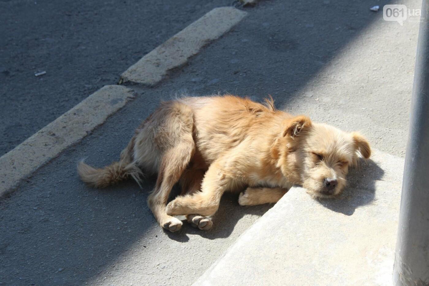 Как там в Токмаке: репортаж из официально депрессивного города, фото-8