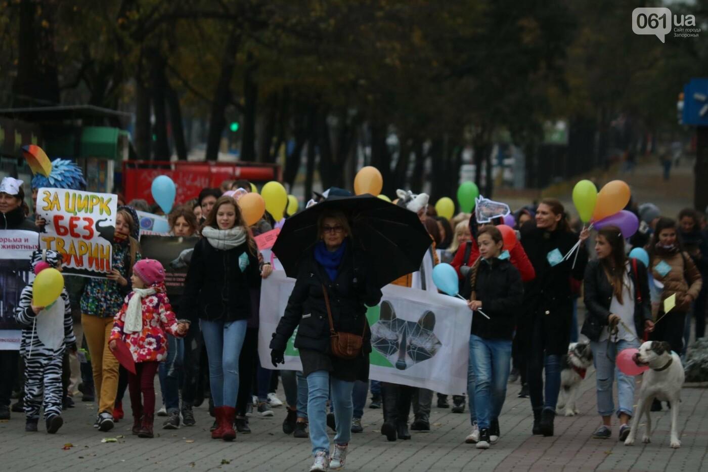 В Запорожье прошел марш за права животных, - ФОТОРЕПОРТАЖ, фото-6
