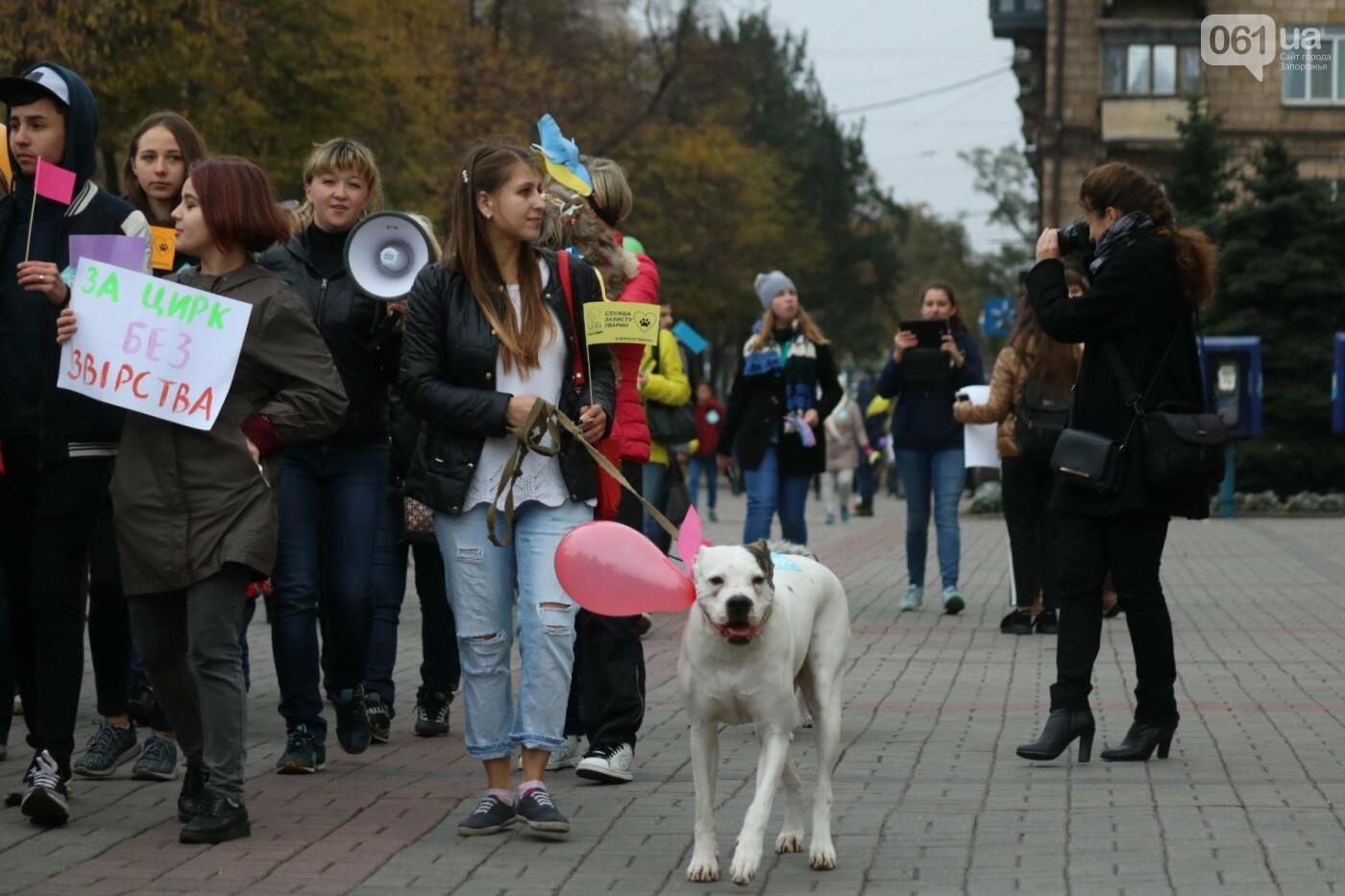 В Запорожье прошел марш за права животных, - ФОТОРЕПОРТАЖ, фото-12