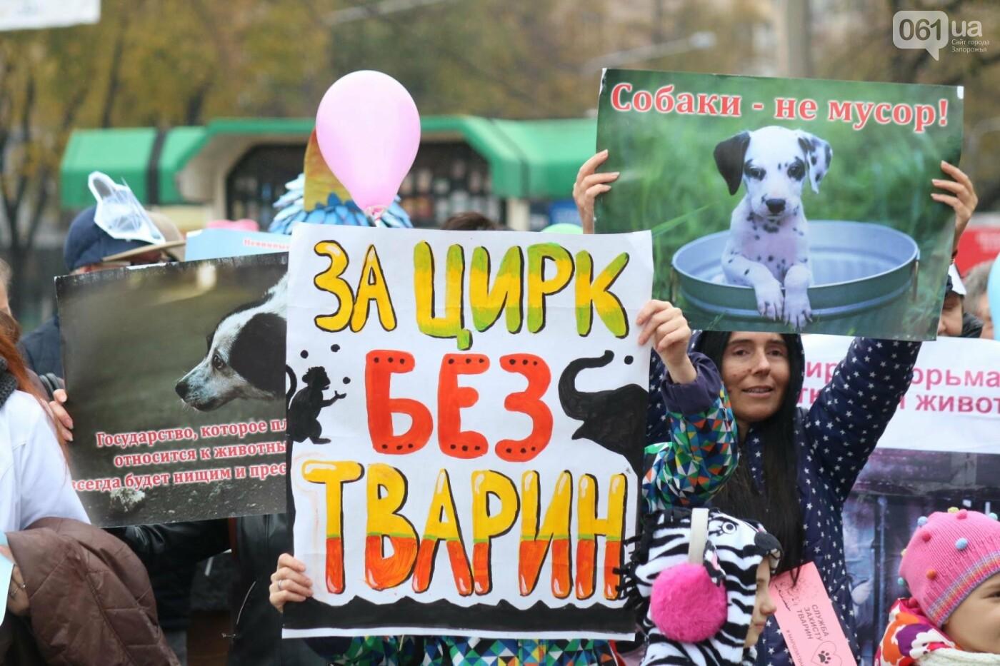 В Запорожье прошел марш за права животных, - ФОТОРЕПОРТАЖ, фото-19