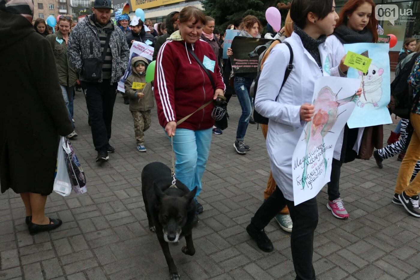 В Запорожье прошел марш за права животных, - ФОТОРЕПОРТАЖ, фото-18