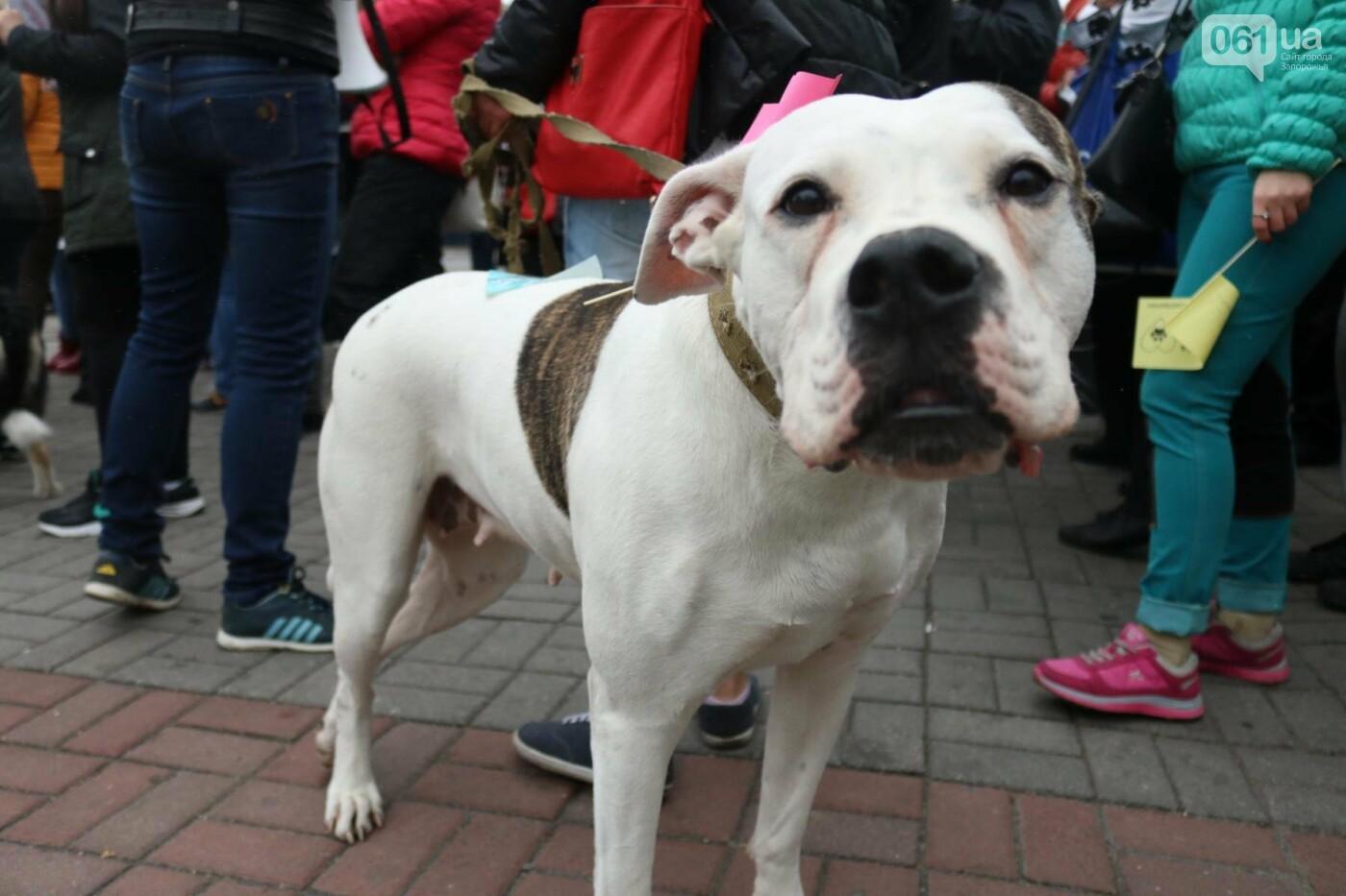 В Запорожье прошел марш за права животных, - ФОТОРЕПОРТАЖ, фото-5
