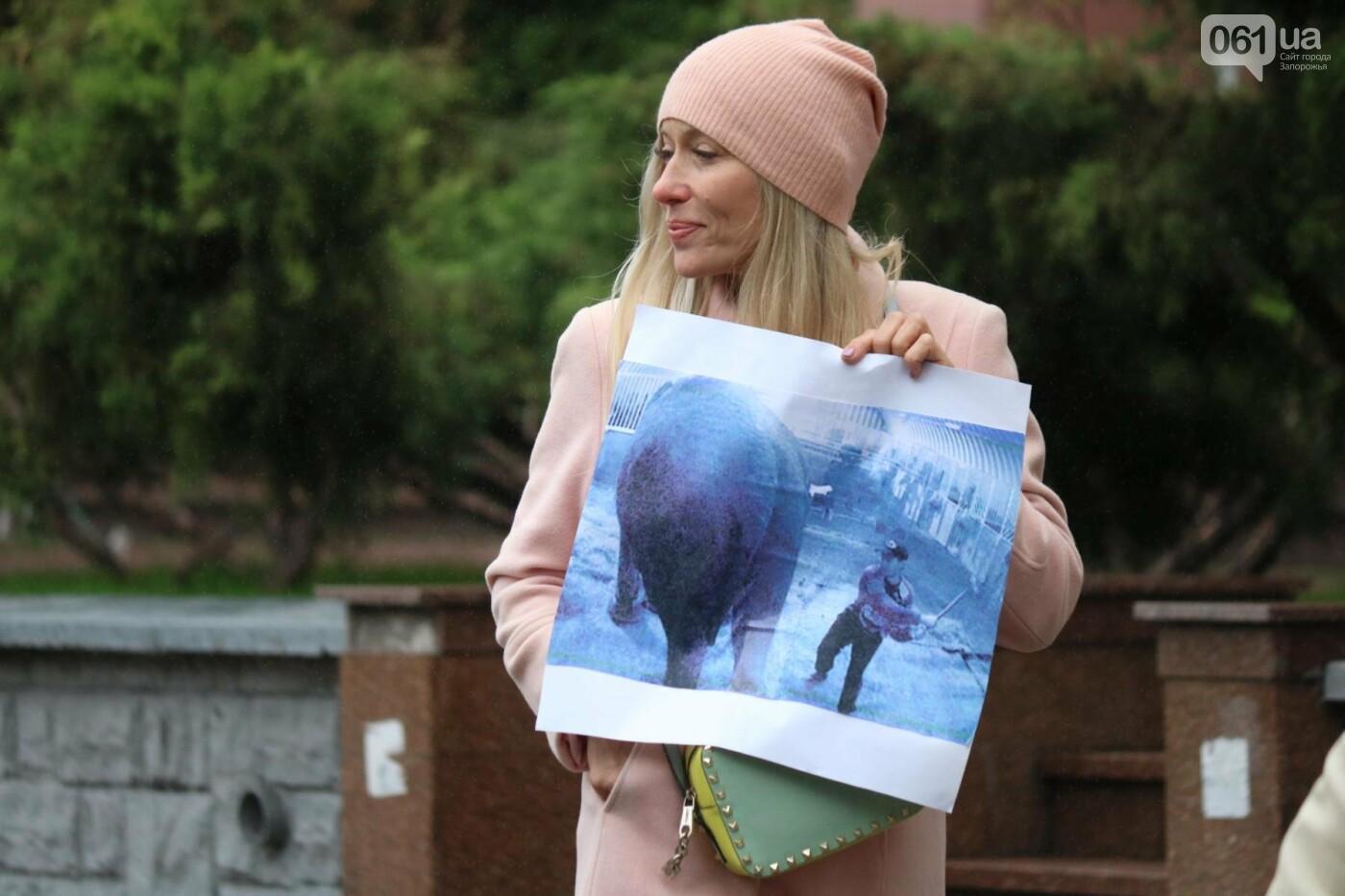 В Запорожье прошел марш за права животных, - ФОТОРЕПОРТАЖ, фото-8