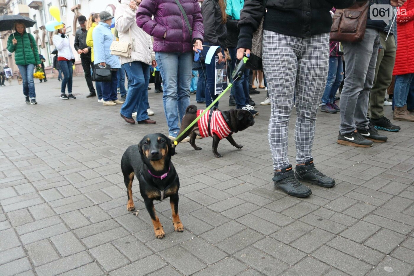 В Запорожье прошел марш за права животных, - ФОТОРЕПОРТАЖ, фото-25