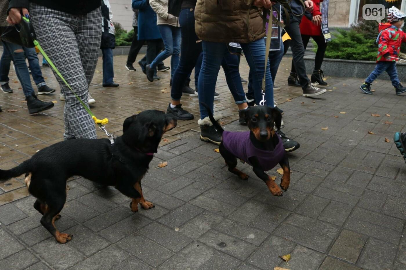 В Запорожье прошел марш за права животных, - ФОТОРЕПОРТАЖ, фото-22