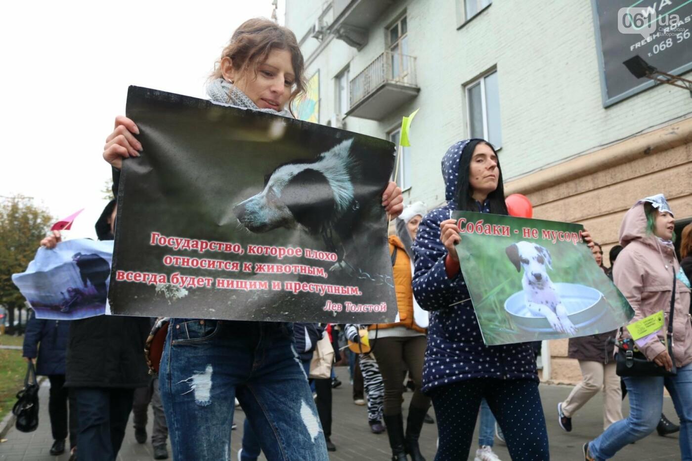 В Запорожье прошел марш за права животных, - ФОТОРЕПОРТАЖ, фото-15