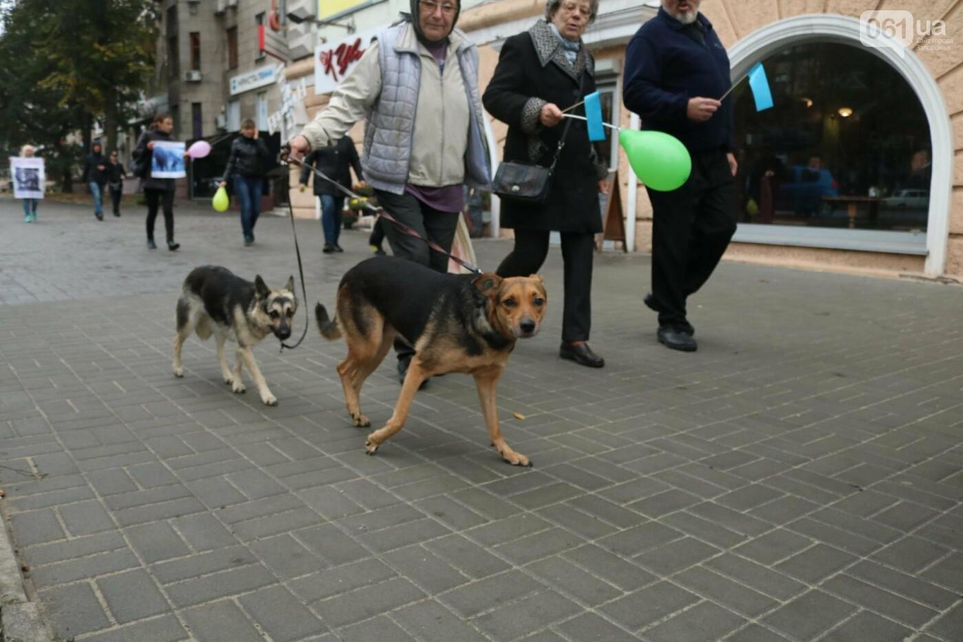 В Запорожье прошел марш за права животных, - ФОТОРЕПОРТАЖ, фото-27