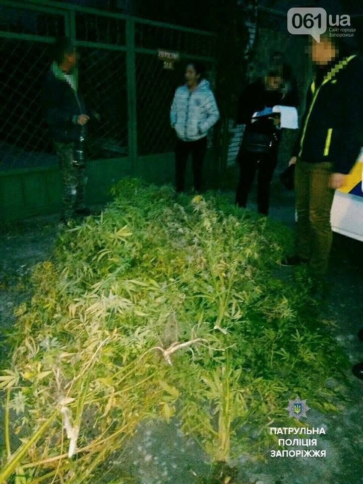 Полицейские искали у запорожца пивные кеги, а нашли 100 кг марихуаны, - ФОТО, фото-1