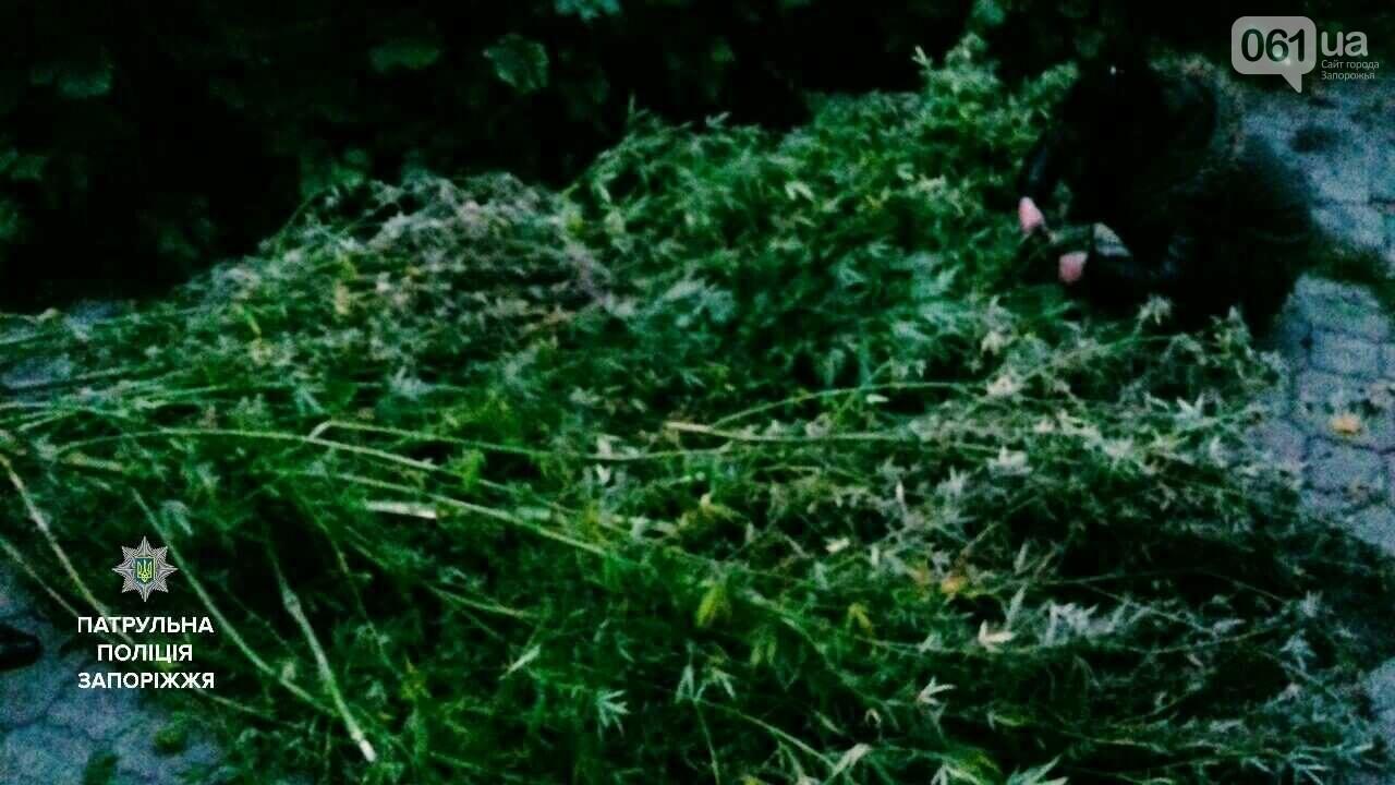 Полицейские искали у запорожца пивные кеги, а нашли 100 кг марихуаны, - ФОТО, фото-2