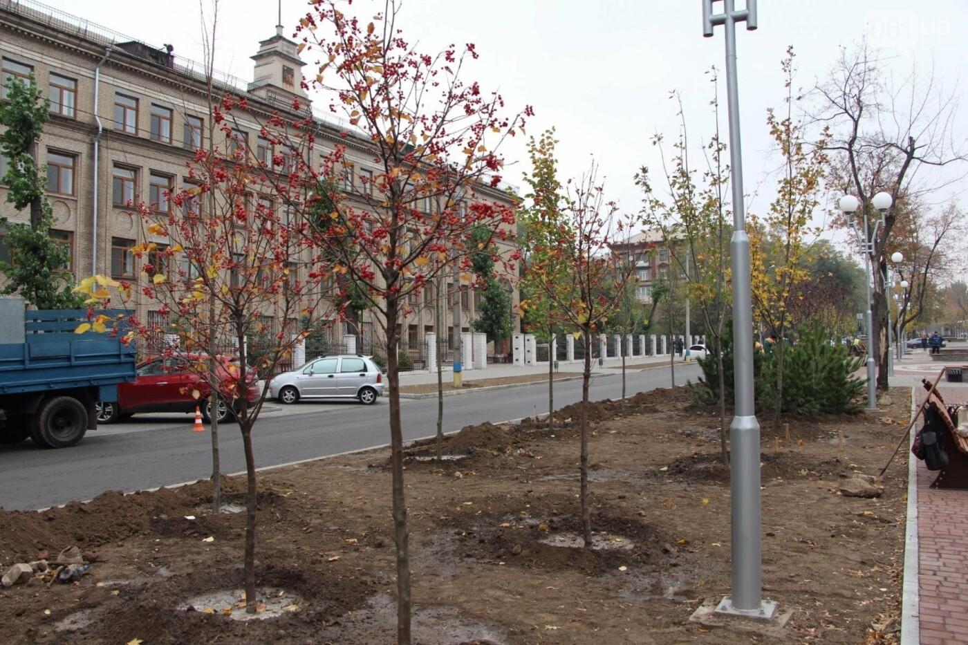 На проспекте Маяковского посадят 100 деревьев и более 700 кустарников, - ФОТО , фото-5