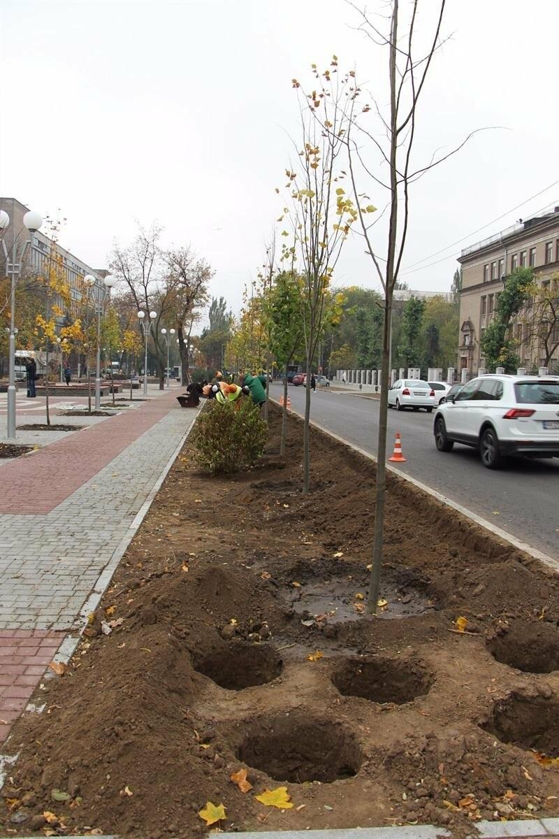 На проспекте Маяковского посадят 100 деревьев и более 700 кустарников, - ФОТО , фото-9