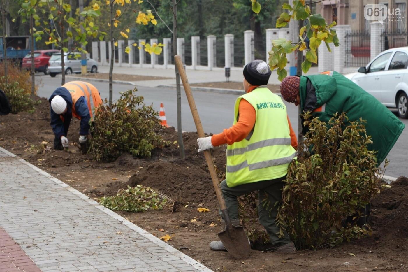 На проспекте Маяковского посадят 100 деревьев и более 700 кустарников, - ФОТО , фото-7