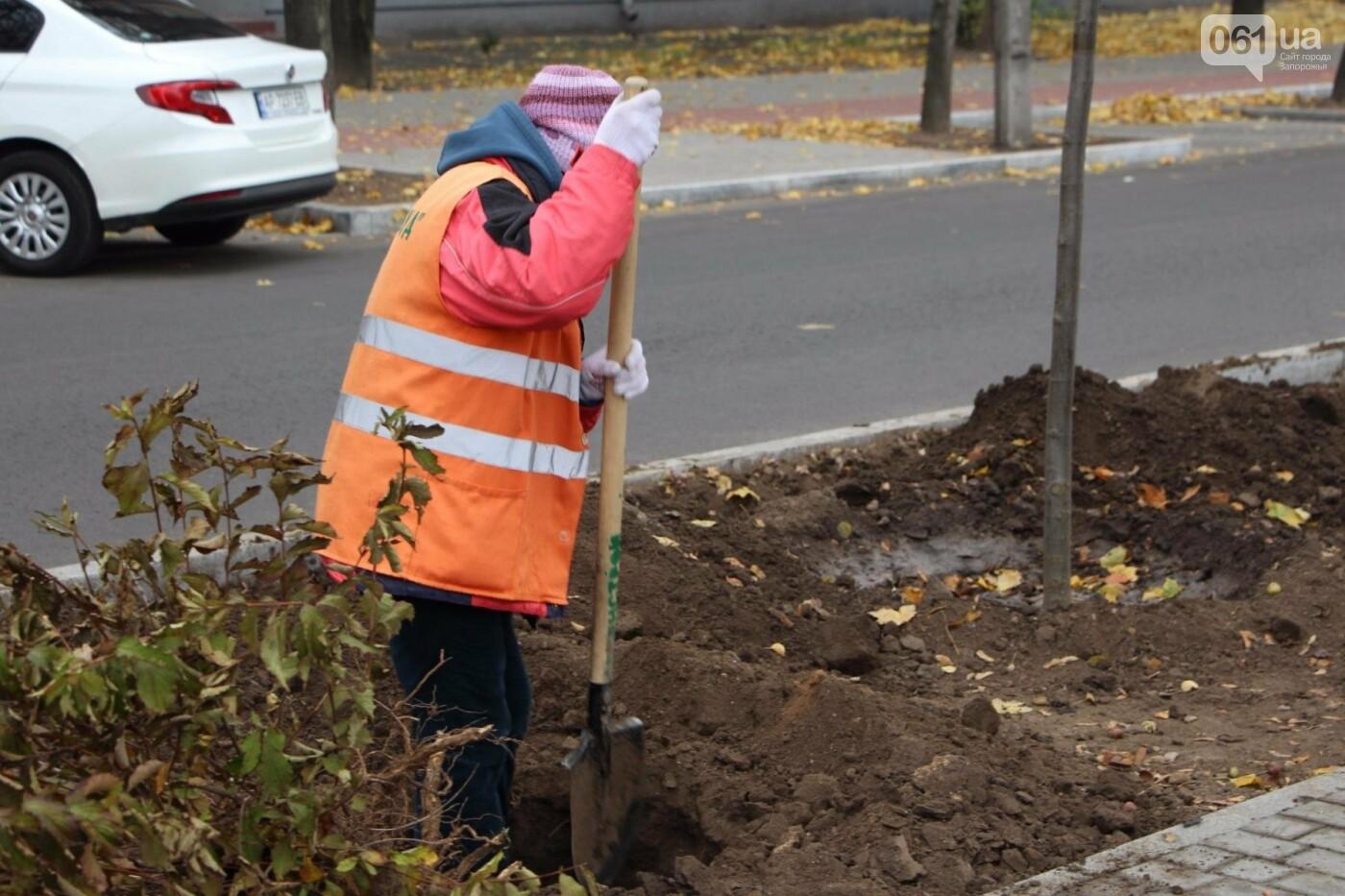 На проспекте Маяковского посадят 100 деревьев и более 700 кустарников, - ФОТО , фото-8