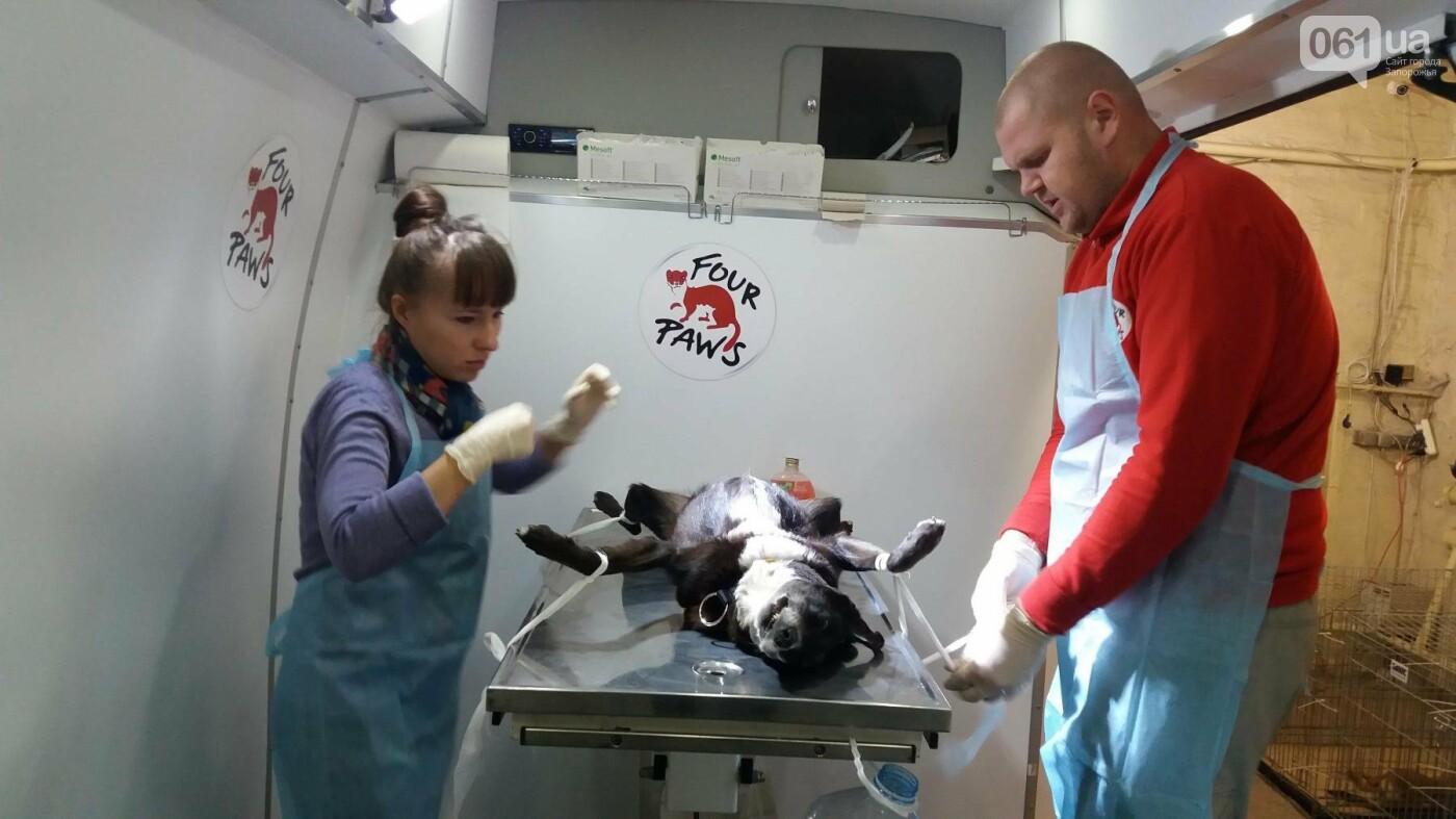 В Запорожье началась бесплатная стерилизация бездомных собак: как работает мобильная ветклиника, – ФОТОРЕПОРТАЖ, фото-5
