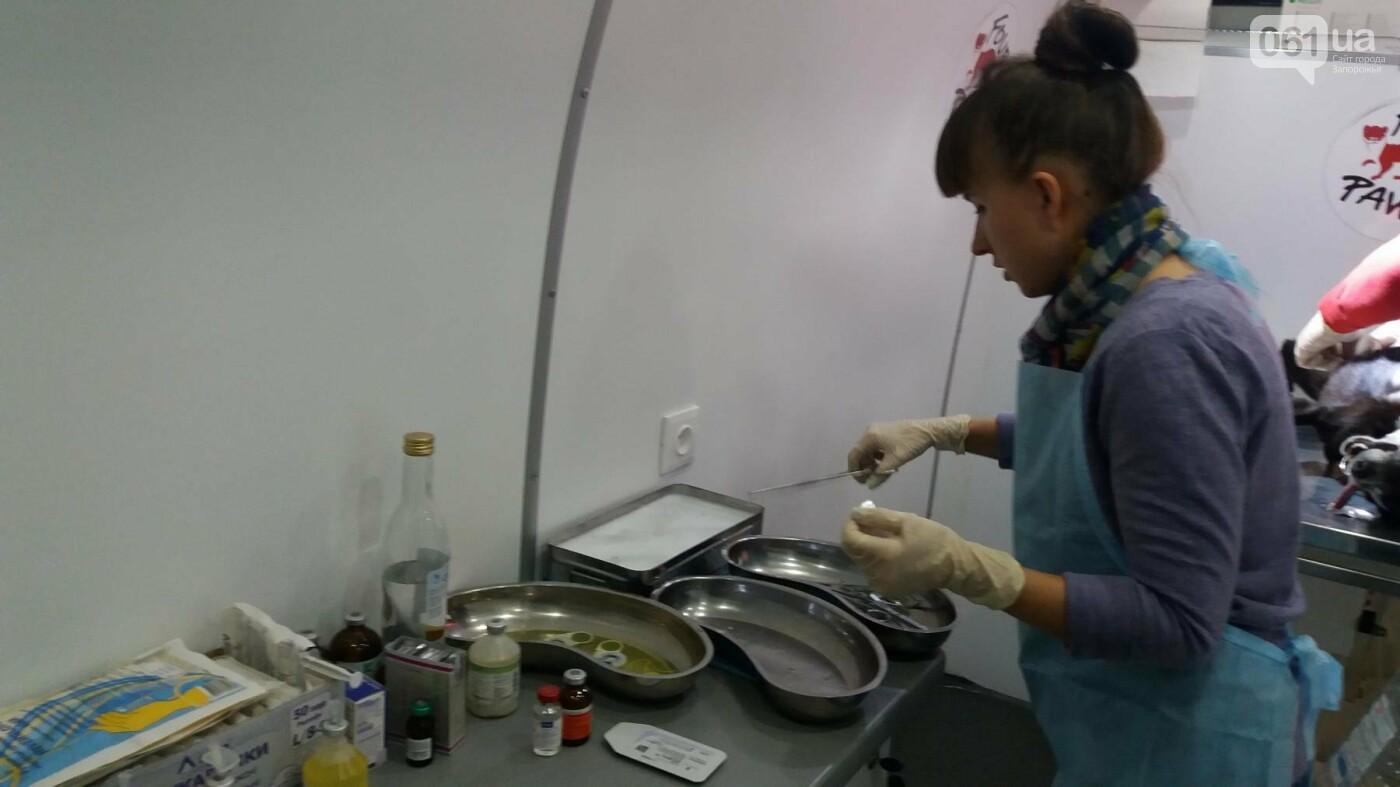 В Запорожье началась бесплатная стерилизация бездомных собак: как работает мобильная ветклиника, – ФОТОРЕПОРТАЖ, фото-3